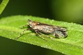 Insekter — Stockfoto