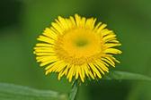 Divoké rostliny — Stock fotografie