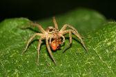 паук — Стоковое фото