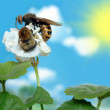 Wasp and bumble bee on a flower — Stock Photo