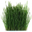 Green grass — Stock Photo #5537357