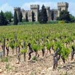 Old vineyard — Stock Photo #5537413
