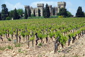 Old vineyard — Stock Photo