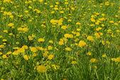 Prado flores — Foto de Stock