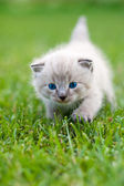 White kitten on the grass. — Stock Photo