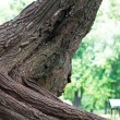 Big stem of tree in the park — Stock Photo