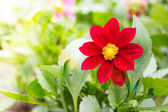 Single beautiful flower outdoor — Stock Photo