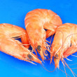 Three shrimps over blue - Stock Photo