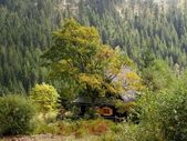 Cottage house in the mountain forest — Stock Photo