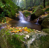 Forest brook — Stock Photo
