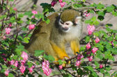 обезьяна в кустах — Стоковое фото