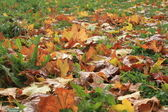 ダウン落ち葉 — ストック写真