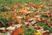 Le foglie cadute giù — Foto Stock