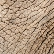 Elephant skin - Stock Photo