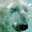 Polar bear — Stock Photo #5405913