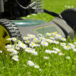 A lawnmover - Stock Photo