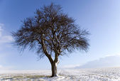 The Tree — Stock Photo