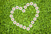 Heart and daisies — Stockfoto
