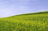 Rural landscape — Foto de Stock