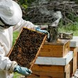 A beekeeper at work — Stock Photo