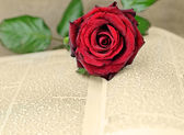 Romance — Stock Photo
