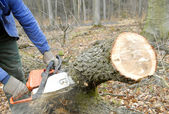 Woodcutter — Stock Photo