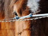 Paard weergave — Stockfoto