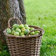 Stock Photo: Greengage