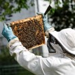 Beekeeper — Stock Photo #6412870