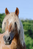 Horse portrait — Stock Photo