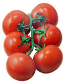 Tomatoes on a branch — Stock Photo