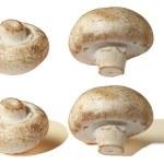 Mushroom champignon — Stock Photo #5961992