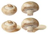 Mushroom champignon — Stock Photo