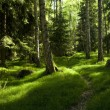 Primeval forest — Stock Photo #5605777