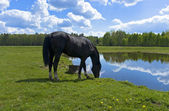 Beautiful spring view of the wood with a horse drinking water — Stock Photo