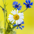 Wild flowers on a yellow background — Stock Photo #5831309