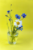 Wild flowers on a yellow background — Стоковое фото