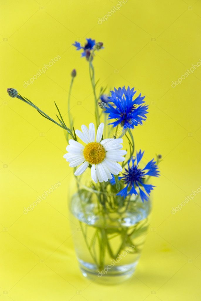 Wild flowers on a yellow background  Stock Photo #5831311