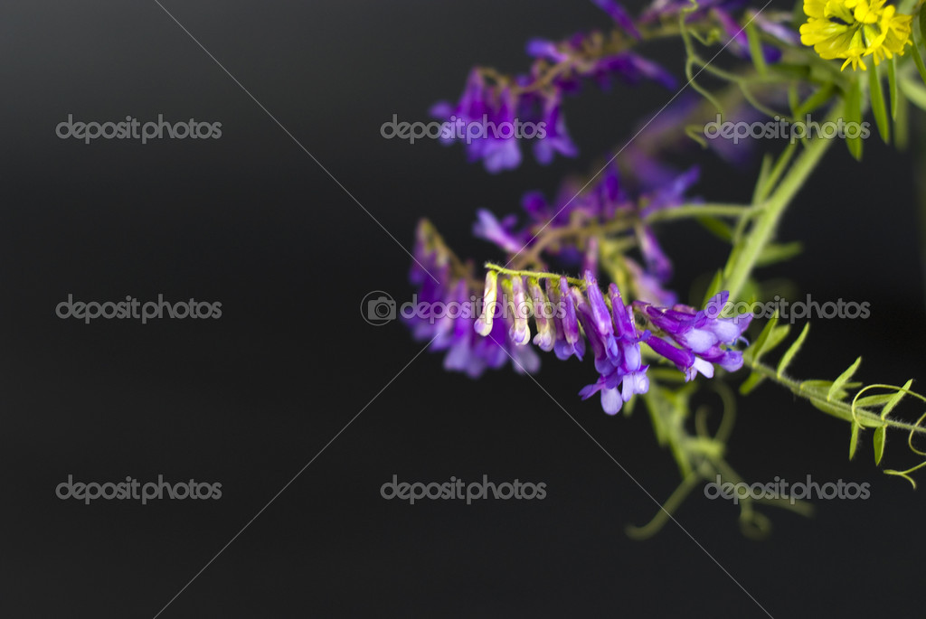Wild flowers on a black background — Stock Photo #5849309