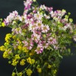 Bouquet of summer fresh wild flowers isolated on black background — Stock Photo