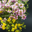 Bouquet of summer fresh wild flowers isolated on black background — Stock Photo #5999248