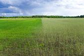 Green field under rainy sky — Stock Photo