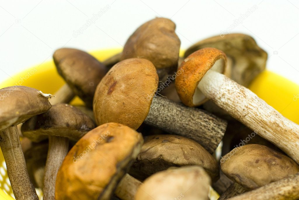 Fresh mushrooms in a yellow bowl  Stock Photo #6279957