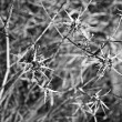 Thorny plant. — Stock Photo #6506395