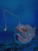 Lantern fish — Stock Photo