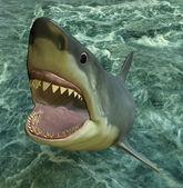 Ataque de tiburón — Foto de Stock