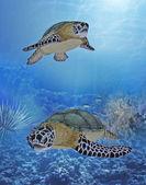 Happy turtles — Stock Photo
