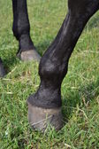 Hoofs of a horse. — Stockfoto