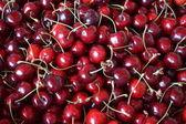Petits fruits cerise. — Photo
