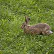 Rabbit 2 - Stock Photo